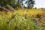 Sunny Grassy Meadow on the Island of Kökar in Åland
