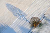 Winterstimmung: EUROPA, DEUTSCHLAND, NIEDERSACHSEN, LUENEBURG (EUROPE, GERMANY), 10.01.2009: Baum, Feld, Schnee, Acker, Schatten, lang, Luftbild, Luftansicht, Air, Aufwind-Luftbilder..c o p y r i g h t : A U F W I N D - L U F T B I L D E R . de.G e r t r u d - B a e u m e r - S t i e g 1 0 2, .2 1 0 3 5 H a m b u r g , G e r m a n y.P h o n e + 4 9 (0) 1 7 1 - 6 8 6 6 0 6 9 .E m a i l H w e i 1 @ a o l . c o m.w w w . a u f w i n d - l u f t b i l d e r . d e.K o n t o : P o s t b a n k H a m b u r g .B l z : 2 0 0 1 0 0 2 0 .K o n t o : 5 8 3 6 5 7 2 0 9.V e r o e f f e n t l i c h u n g  n u r  m i t  H o n o r a r  n a c h M F M, N a m e n s n e n n u n g  u n d B e l e g e x e m p l a r !.