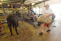 NWA Democrat-Gazette/FLIP PUTTHOFF <br /> FAIR OPENING DAY<br /> Ty White, 12, of Sulphur Springs brings hay to livestock on Tuesday Aug. 6 2019 during opening day of the Benton County Fair. The fair continues today and runs through Saturday at the fairgrounds near the Vaughn community west of Bentonville. Admission is free.