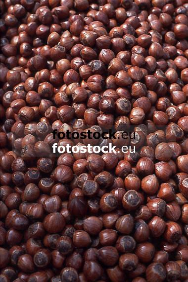 Hazelnuts<br /> Avellanas<br /> Haseln&uuml;sse<br /> <br /> Original: 35mm slide transparency