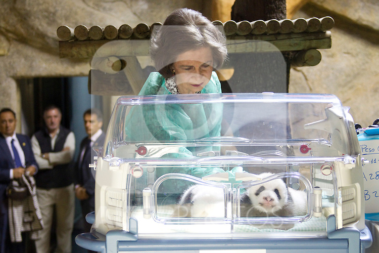 MADRID (05/11/2010).- Queen Sofia visited the two Giant Pandas borned at Madrid Zoo last september 5th...Photo: Cesar Cebolla / ALFAQUI