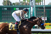 CERRITOS, CA  JULY 24: #4 Marley's Freedom, ridden by Drayden Van Dyke, wins the Great Lady M Stakes (Grade ll) by open lengths on July 7, 2018, at Los Alamitos Race Course in Cerritos, CA.  (Photo by Casey Phillips/Eclipse Sportswire/Getty Images)