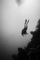 Scuba diving scenics in black and white; reefs off West End, Roatan, Honduras in December 2012.