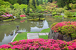 Seattle, WA:  Fushia blossoms on evergreen azaleas in spring from the upper hillside overlooking the lake in the Japanese Garden in Washington Park Arboretum