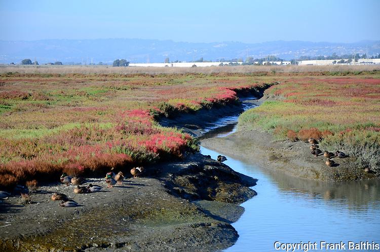 Hayward Regional Shoreline