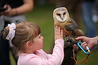 Pictured: Riley Carey, 4 with an owl Saturday 13 August 2016<br />Re: Grow Wild event at  Furnace to Flowers site in Ebbw Vale, Wales, UK
