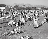 ERITREA, Karen, weekend goat market in the town of Karen (B&W)