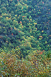 Mixed forest, autumn<br />