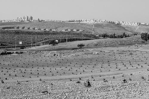 """Maali Adumim, Palestine, Avril 2011. Un champ d'Olivier a ete rase par l'armee Israelienne, pour """"raison de securite"""". Situe dans la zone """"E1"""", ce terrain fait parti d'une zone peu urbanisee mais strategique, qui fait l'objet de violentes controverses: situee au coeur de la Cisjordanie, les autorites Israeliennes souhaitent y faire une extension geante de Jerusalem, qui aurait pour consequence de couper ce qui est devenu l'axe de liason principal pour les Palestiniens entre le nord et le Sud de la Cisjordanie."""