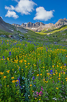 San Juan Mountains, CO<br /> American Basin withh paintbrush (Castilleja rhexifolia), and sneezeweed (Dugaldia hoopesii) and delphinium (Delphinium barbeyi) and other wildflowers in a meadow beneath Handies Peak