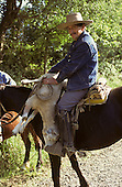 Southern Chile. Man on horseback with spurs and wooden stirrups carrying a sheep on his horse.