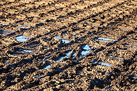 Harvested potato field, partially flooded - Lincolnshire, December