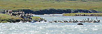 The Hulahula River flows north from Alaska's Brooks Range mountains to the Coastal Plain in the Arctic National Wildlife Refuge.
