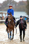 November 1, 2018: Enable (GB), trained by John H.M. Gosden, walks to exercise in preparation for the Breeders' Cup Turf at Churchill Downs on November 1, 2018 in Louisville, Kentucky. Alex Evers/Eclipse Sportswire/CSM