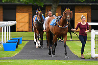 Horses are led into the ParadeRing for the first race during Evening Racing at Salisbury Racecourse on 3rd September 2019