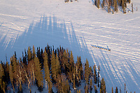 Jodi Bailey runs down a slough with long shadows from the surrounding spruce forest on the way to the Finger Lake checkpoing during Iditarod 2011