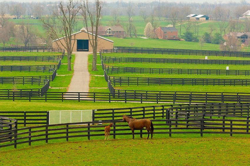 Mares and foals winstar farm thoroughbred horse farm for Horse farm