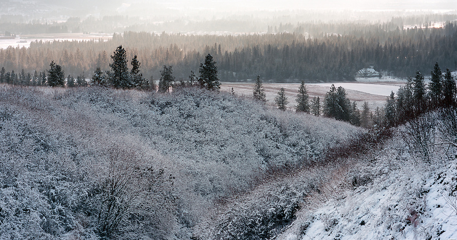 A chilly winter day shows a frosty hillside near Mt. Spokane in Washington State.