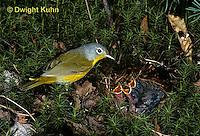 WB02-003z  Nashville Warbler - adult feeding young in nest - Vermivora ruficapilla