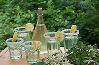 Holunderblüten-Sirup, Holunderblütensirup, Sirup aus Holunderblüten, Blüten vom Holunder werden zusammen mit Wasser, Zitronen, Zitronensäure und Zucker in einem Gefäß angesetzt und ziehen gelassen, fertiger Sirup wurde in Flaschen abgefüllt und in Gläsern gemeinsam mit Selter serviert, Schwarzer Holunder, Fliederbeere, Sambucus nigra, Common Elder, Elderberry, Sureau commun, Sureau noir