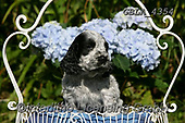 Bob, ANIMALS, REALISTISCHE TIERE, ANIMALES REALISTICOS, dogs, photos+++++,GBLA4354,#a#, EVERYDAY