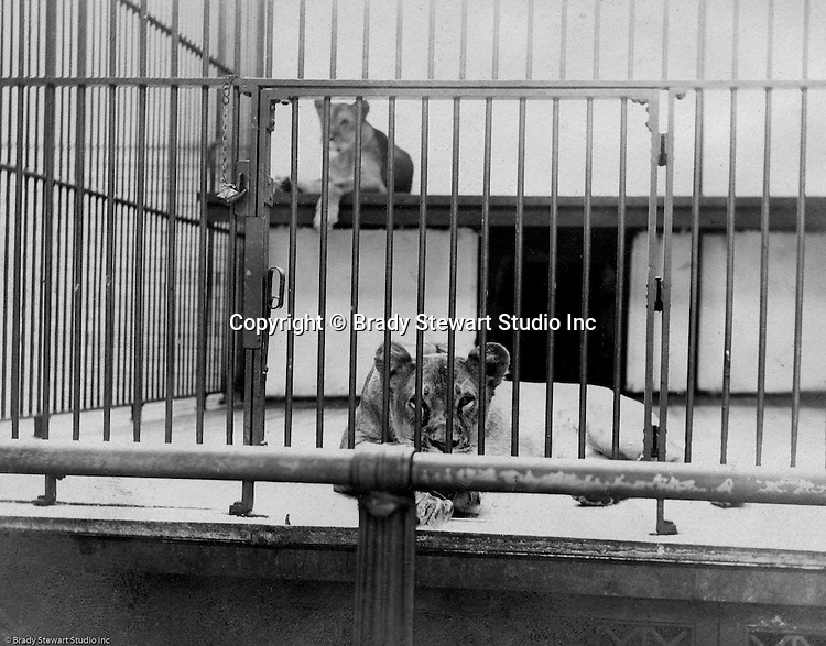 Highland Park:  Two femaie lons posing for a photograph at the Pittsburgh Zoo - 1904.  The zoo opened in 1898 with money donated by Christopher Magee, has evolved into one of the best Zoos for animals - no more cages with concrete floors. The Stewart family visited the park and zoo often since they lived nearby on Wellesley Avenue in Highland Park.