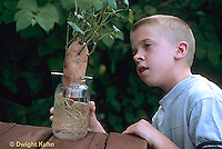 HS23-008z  Asexual Reproduction - boy observing sweet potato growth