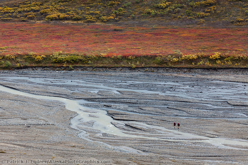 Two hikers travel the braided East fork river in Denali National Park, interior.