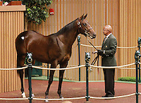 September 10, 2014: Hip #566 More Than Ready - Dawn Chorus consigned by Paramount Sales sold for $485,000 to Lael Stable/Roy & Gretchen Jackson at the Keeneland September Yearling Sale.   Candice Chavez/ESW/CSM