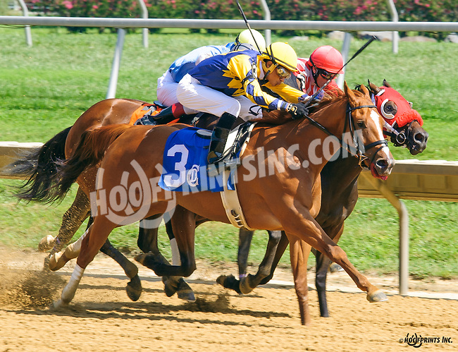 Silver Trophy winning at Delaware Park on 8/24/16