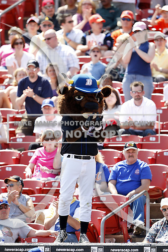 May 23, 2009:  Buster T. Bisons leads the cheers during the final out of a game at Coca-Cola Field in Buffalo, NY.  Photo by:  Mike Janes/Four Seam Images