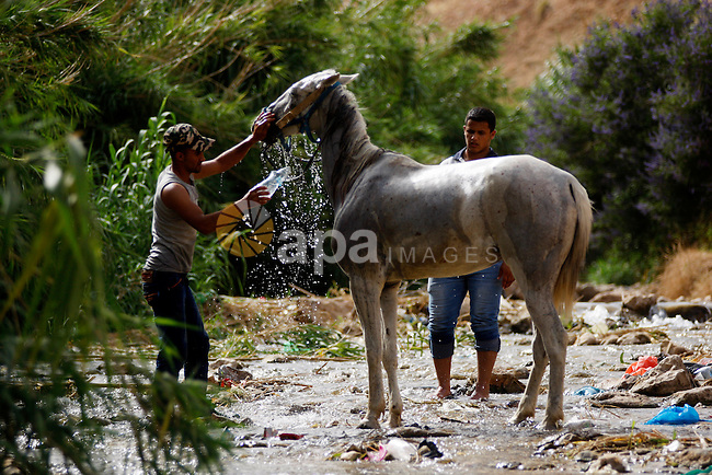 A Palestinian man washes his horse in a water canal used for irrigation as temperatures soar in the West Bank city of Jericho to 44 degrees Celsius (111 Fahrenheit), on May 27, 2015. Photo by Shadi Hatem