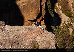 California Condor #22, South Rim, Grand Canyon, Arizona