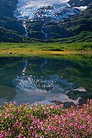 Dwarf fireweed, Divide Lake and<br />   Shakespeare Glacier,  Kenai Mountains<br /> Chugach National Forest<br /> Alaska