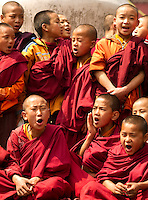 Buddhist monks in a  Losar chanting ceremony in a monastery in Sikkim India