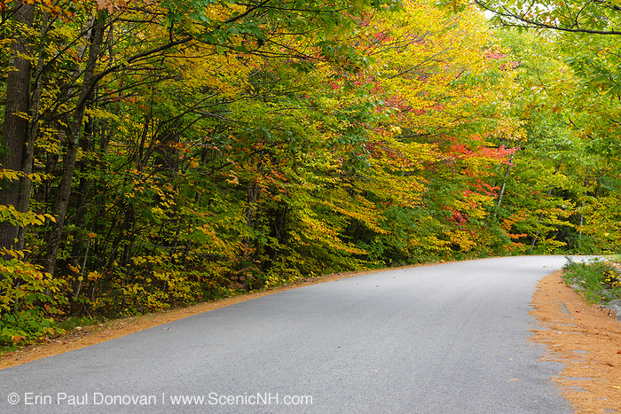 Autumn foliage along Passaconaway Road during the autumn months in Albany, New Hampshire USA.