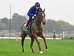 November 1, 2018 : Polydream, trained by Freddy Head, trains for the Breeders' Cup Mile at Churchill Downs on November 1, 2018 in Louisville, KY. Jessica Morgan/ESW/CSM