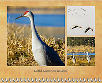 2015 Calendar - Birds of a Feather with photography by Chris Bidleman.<br /> A Sandhill Crane (Grus canadensis) is standing in field of brown grass with a body of water in the background showing his profile with the sun in his face at the Ridgefield National Wildlife Refuge.