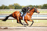 #40Fasig-Tipton Florida Sale,Under Tack Show. Palm Meadows Florida 03-23-2012 Arron Haggart/Eclipse Sportswire.