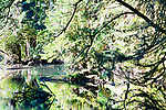 Lake Sylvia, near Montesano, WA, reflects the dense biodiversity of the Olympic Rain Forest.
