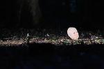 ROSE<br /> <br /> Conception: Rachel Garcia et Hélène Iratchet.<br /> Avec : Hélène Iratchet et Lise Vermot (initialement interprété par Rachel Garcia). <br /> Lumières: Yannick Fouassier.<br /> Production: Association Richard.<br /> Cadre : Festival des Fabriques<br /> Lieu : Temple, Parc Jean Jacques Rousseau<br /> Ville : Ermenonville<br /> Date : 26/06/2015<br /> (C)2015 Laurent paillier / photosdedanse.com, tous droits réservés