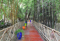 Bamboo grove and path with bamboo railings, Majorelle Garden, Marrakech, Morocco. These botanical gardens were designed by French painter Jacques Majorelle, 1886-1962, in the 1920s and 1930s. He invented the shade of cobalt blue, known as Majorelle blue, which is used on the buildings and walls. Picture by Manuel Cohen