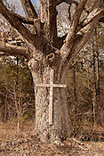 February 9, 2013. 15-501 South, North Carolina. Cross on Tree, 15-501 South, near Sanford.
