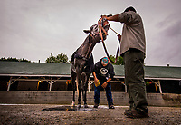 LOUISVILLE, KY - MAY 04: Tapwrit tries to bite his groom during a bath at Churchill Downs on May 04, 2017 in Louisville, Kentucky. (Photo by Alex Evers/Eclipse Sportswire/Getty Images)