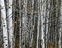 Fall is nearly done,  winter is nearly here near Bear Lake, Utah.