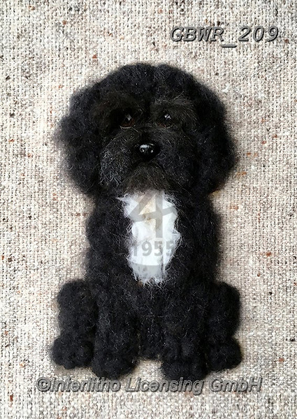 Simon, REALISTIC ANIMALS, REALISTISCHE TIERE, ANIMALES REALISTICOS, innovative, paintings+++++SharonS_CockapooBlack,GBWR209,#a#, EVERYDAY dogs,breeds of dog,