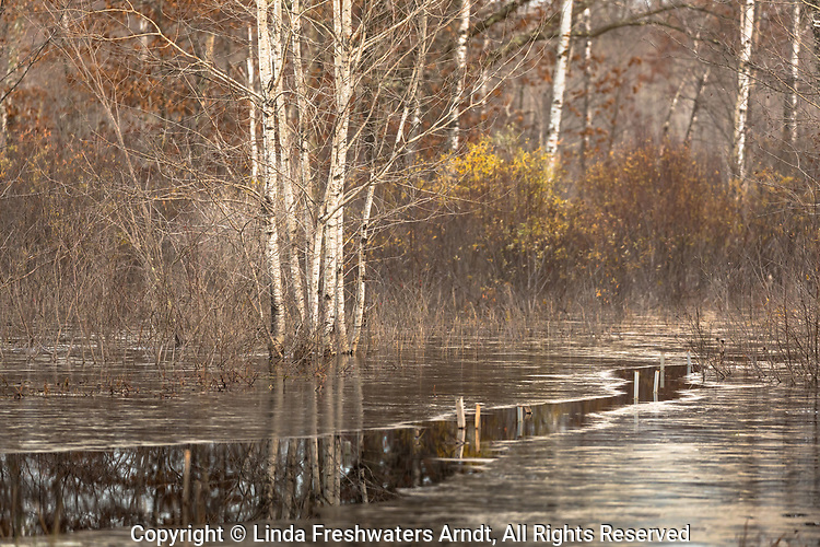 Open water cutting through the thin ice in a wetland in northern Wisconsin.