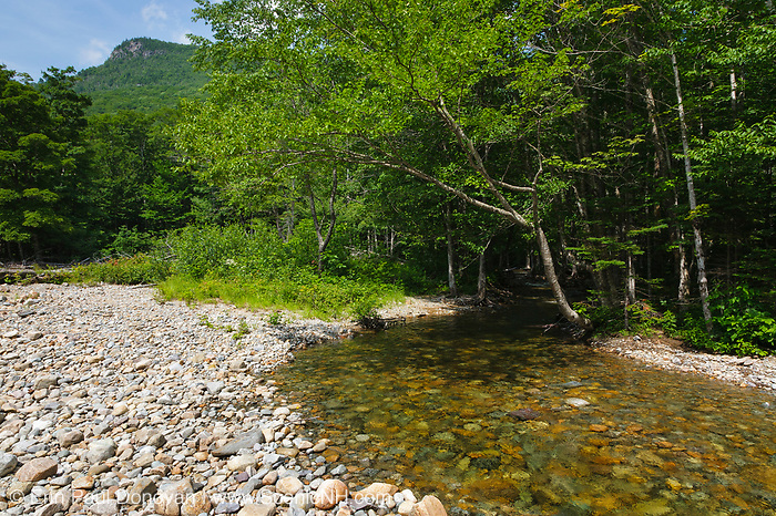 Franconia Brook in the Pemigewasset Wilderness of the White Mountain National Forest in New Hampshire USA during the summer months. The southern end of Owls Head is off in the distance. This area was logged during the East Branch & Lincoln Logging Railroad (1893-1948) era.