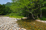 Franconia Brook in the Pemigewasset Wilderness in the White Mountain National Forest in New Hampshire during the summer months. The southern end of Owls Head is off in the distance. This area was logged during the East Branch & Lincoln Logging Railroad (1893-1948) era
