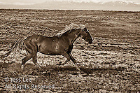 MustangsMcCullough Peaks Mustangs Wild Horse Photography by western photographer Jess Lee. Pictures of mustangs in the West. Fine art images,Prints,photos Wild horse photo,wildhorses in the american west,